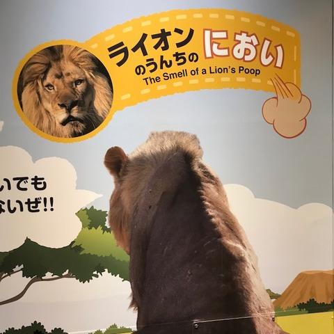 生きものになれる展ライオンの匂い