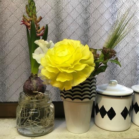 切り花用栄養剤クリザールの効果を検証4