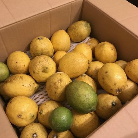 国産レモン大量消費広島から届いたレモン