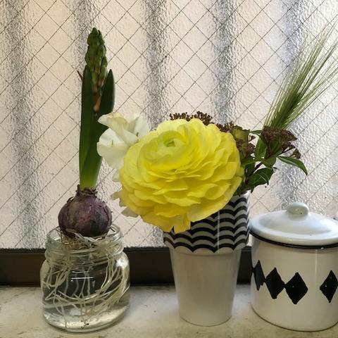 切り花用栄養剤クリザールの効果を検証3