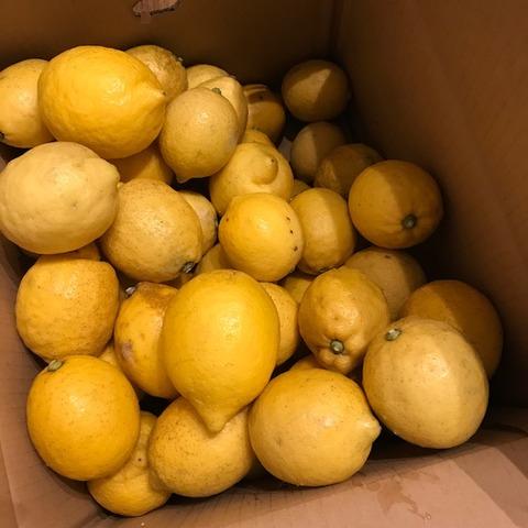 実家から届く宅急便レモン