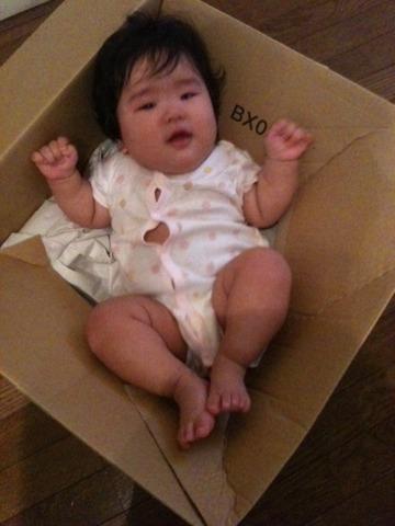 段ボールに入った子供0歳7カ月