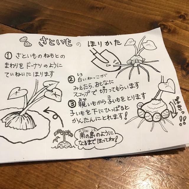 里芋の掘り方図解