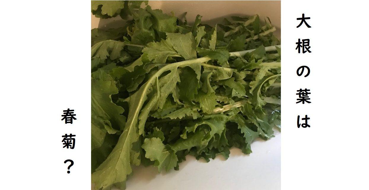 大根の葉大量消費レシピ
