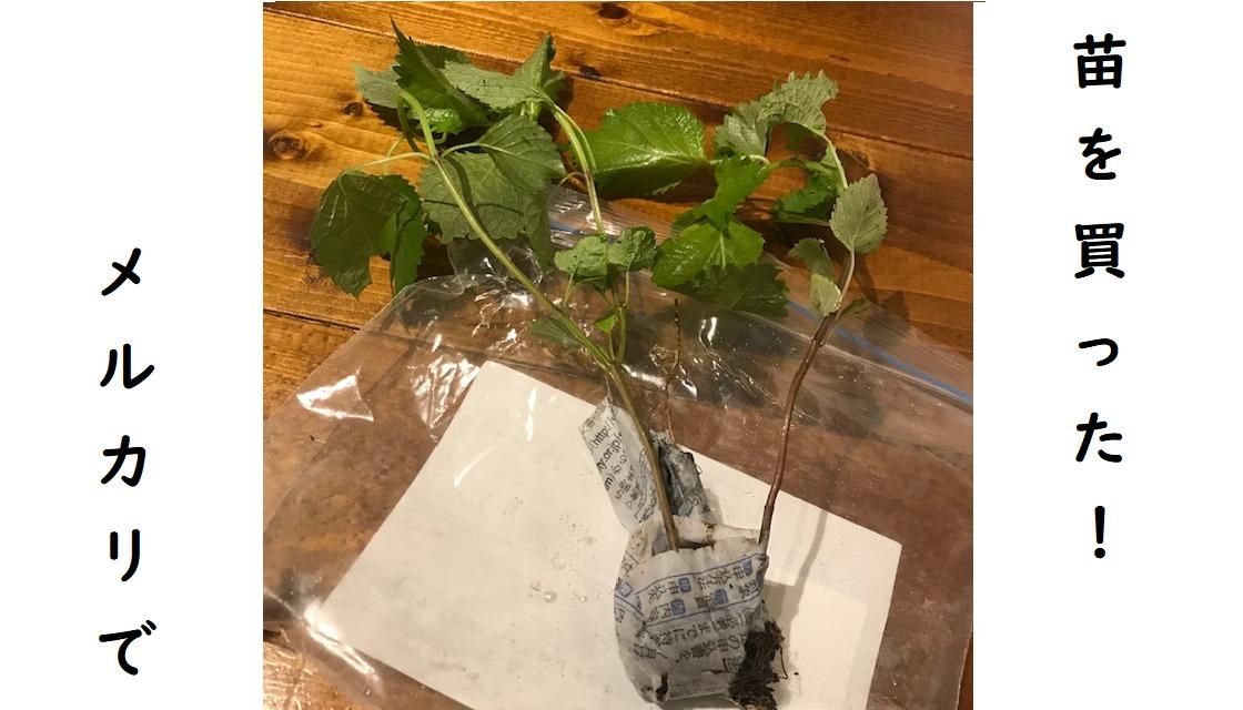 メルカリで購入した苗が届いた植えた
